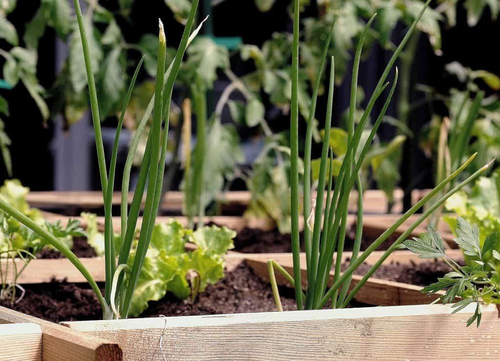 Jardin en mars: que faut-il savoir?