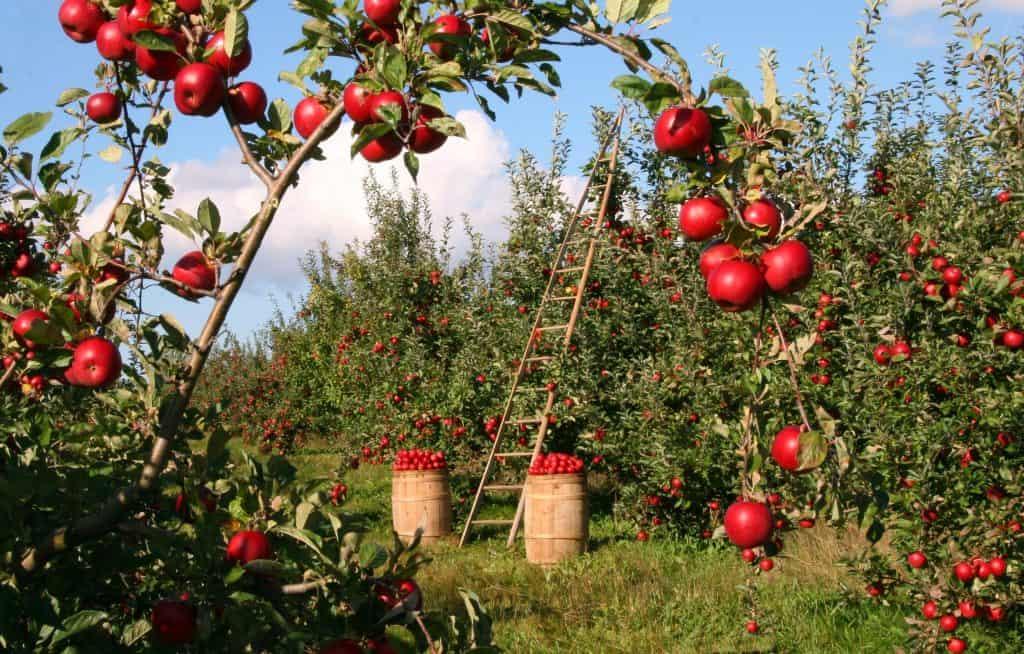 Jardinage bio: pas à pas vers une nouvelle manière de jardiner