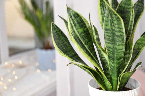 Plantes d'intérieurs : Quelles plantes mettre et comment les choisir ?
