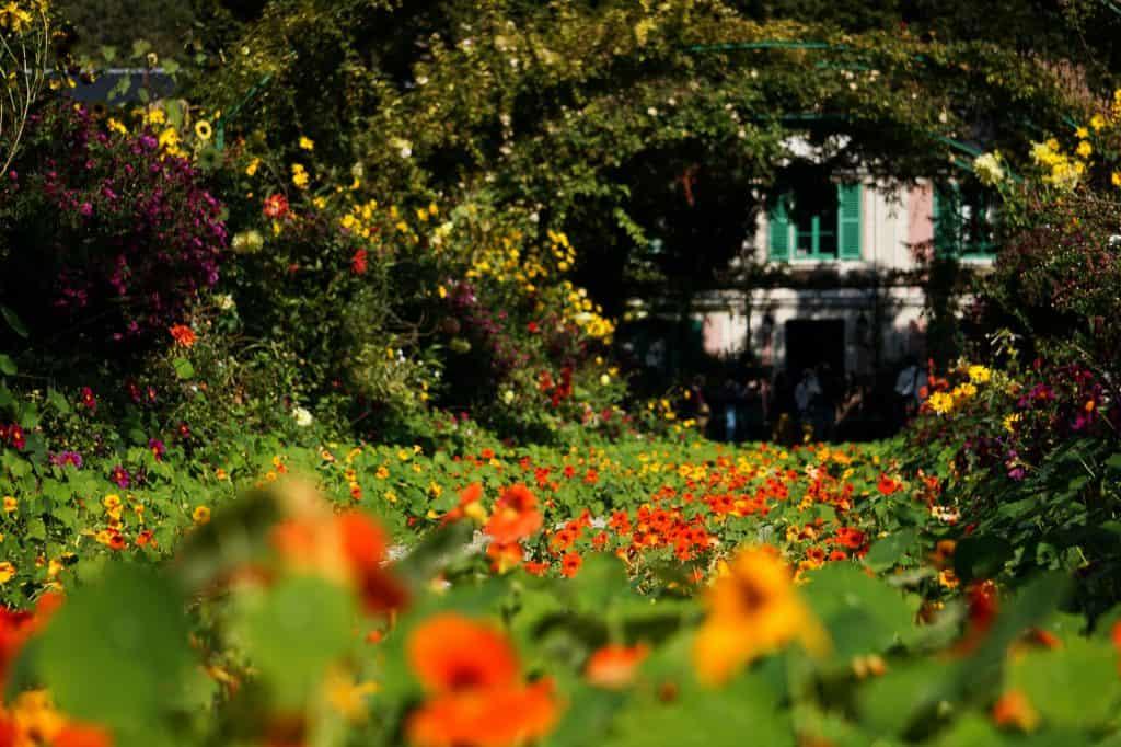 fleurs oranges dans un jardin