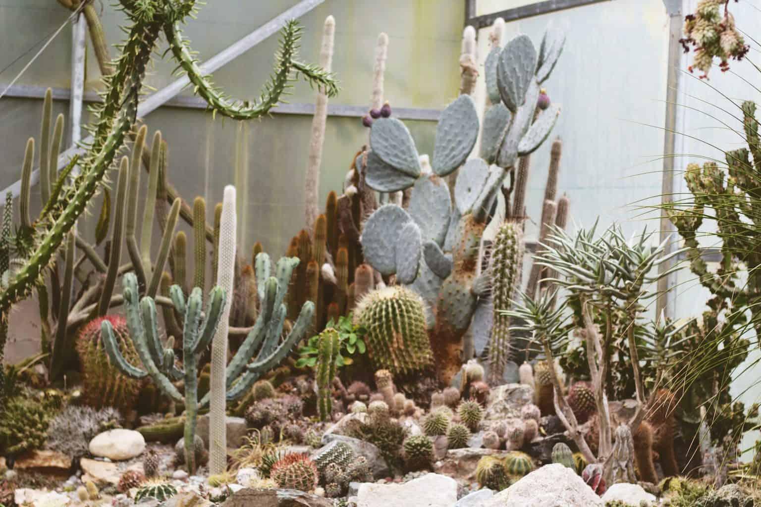 Un ensemble de plusieurs variétés de cactus