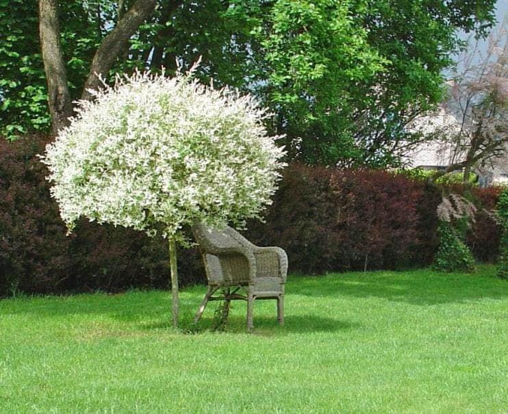 petit arbre fleuri
