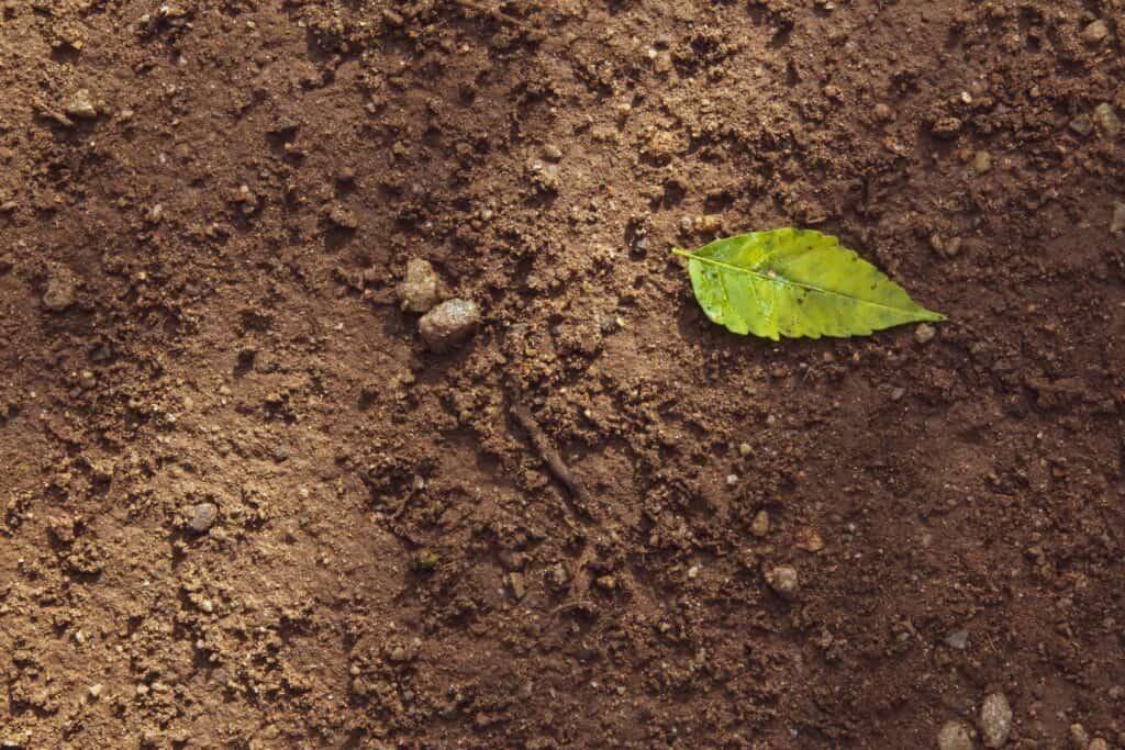 utiliser de la terre végétale