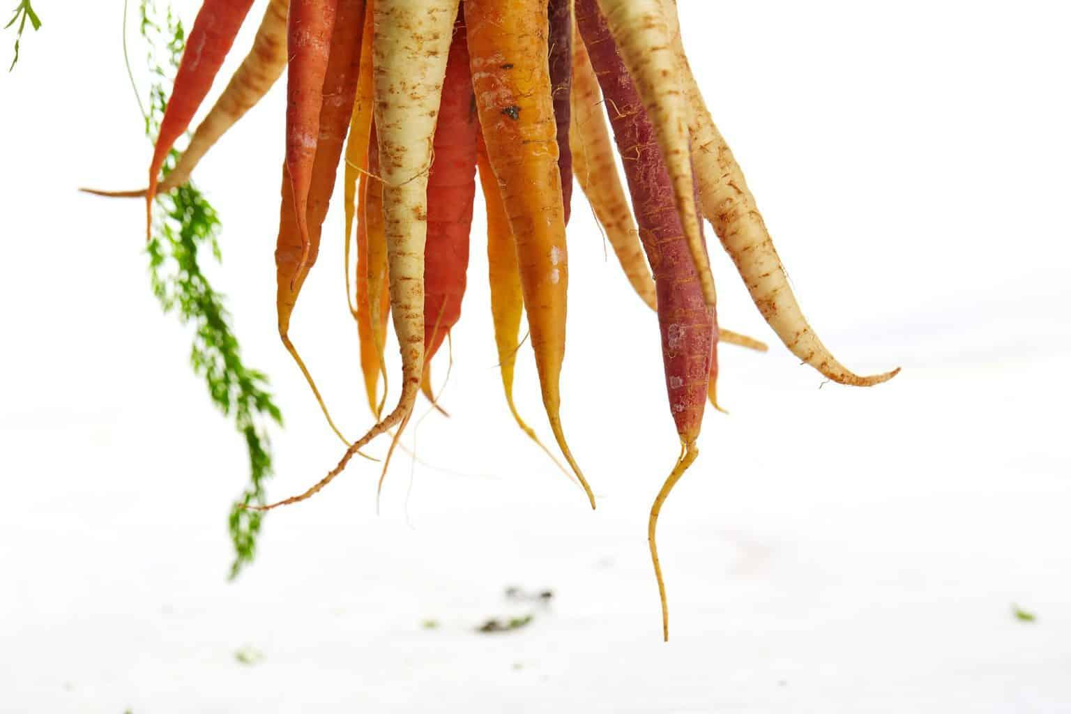 variété de carottes