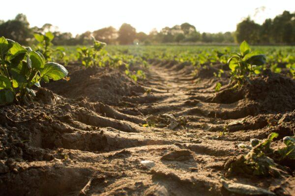 Terre végétale : tout ce qu'il faut savoir
